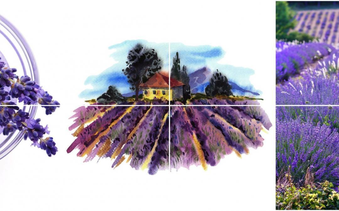 [3] Lavender Lavendel