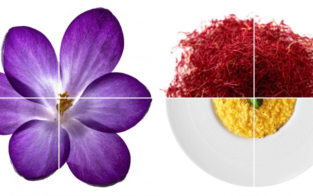 [2] Saffron Safran