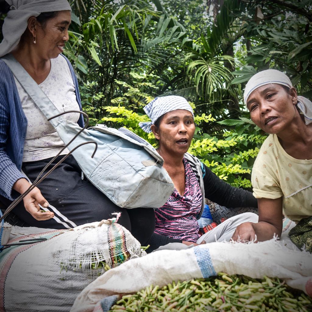 Clove harvesters, North Bali