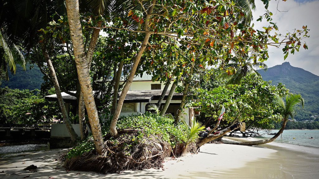 Das Baobab in Mare Anglaise am Strand von Beau Vallon, Mahé, Seychellen