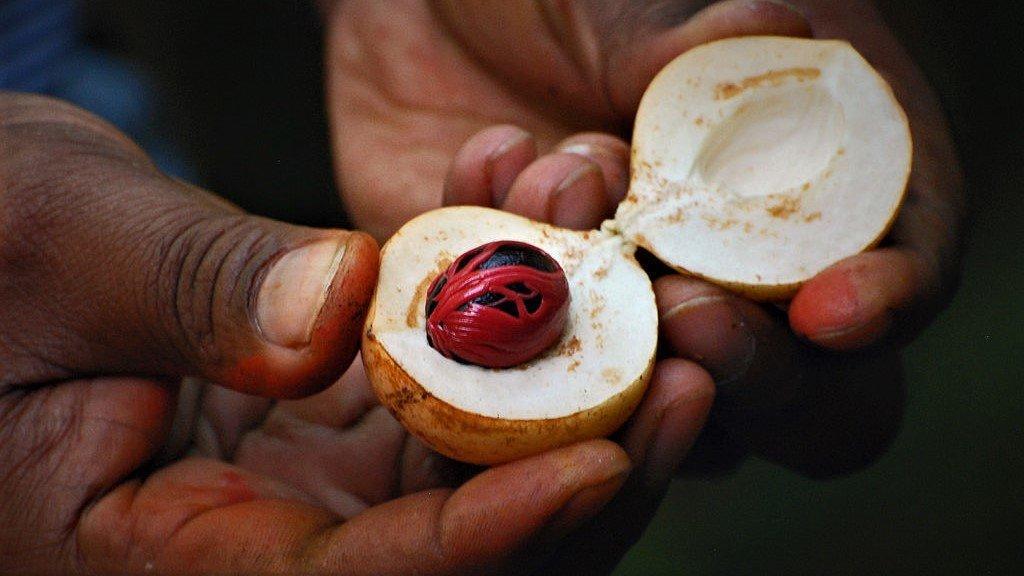 Farmer's hands showing off nutmeg in its shell on Zanzibar (Credit: Harvey Barrison from Massapequa, NY, USA)