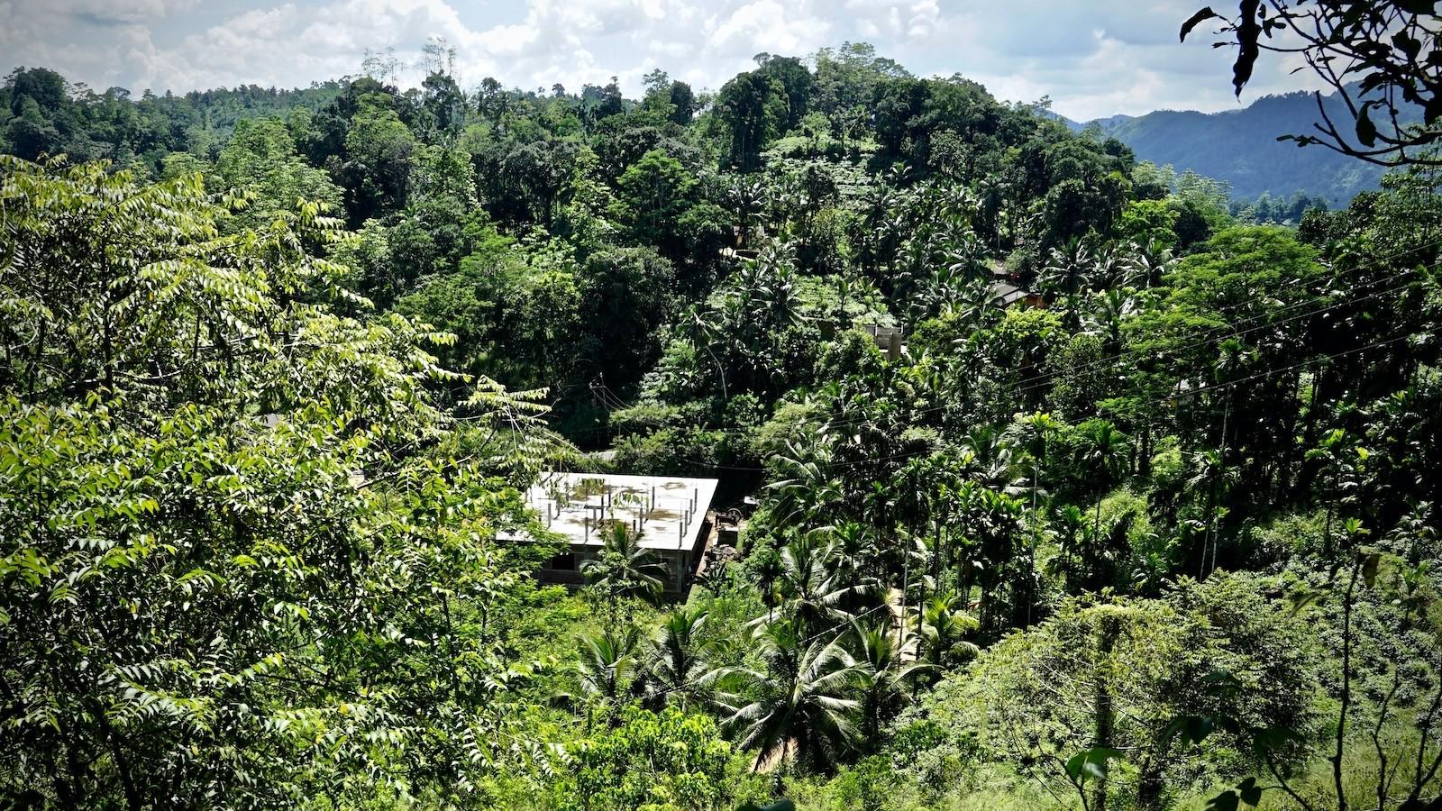 Investition mitten im Busch. Eine neue Zimtfabrik entsteht in Diyadola im Süden Sri Lankas.