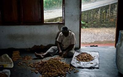 Was ich in Sri Lanka über echten Ceylon Zimt dazugelernt habe