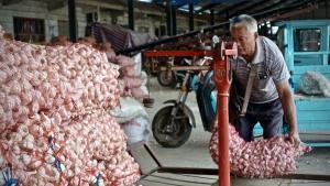 Anlieferung von Knoblauch an der Aufkaufstelle in Shandong, China
