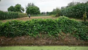 Bäuerliche Familienbetriebe tragen die Landwirtschaft in der chinesischen Provinz Shandong