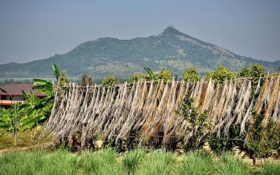 Was ich in Kampot über den teuersten Pfeffer der Welt dazugelernt habe