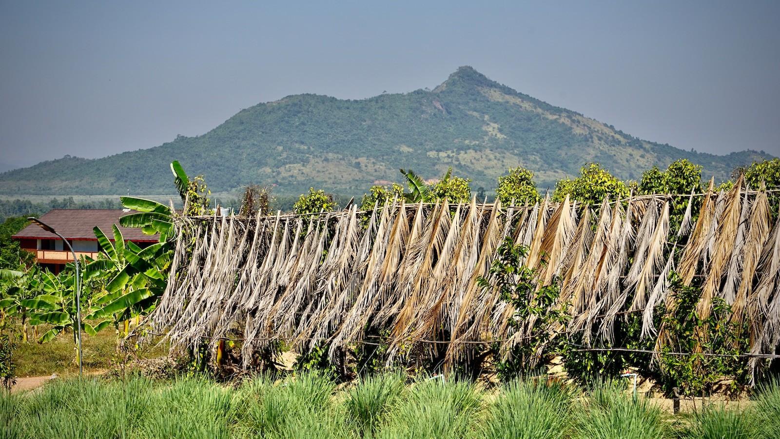 Kampot Pfeffer Plantage im Schutz der Elefantenberge