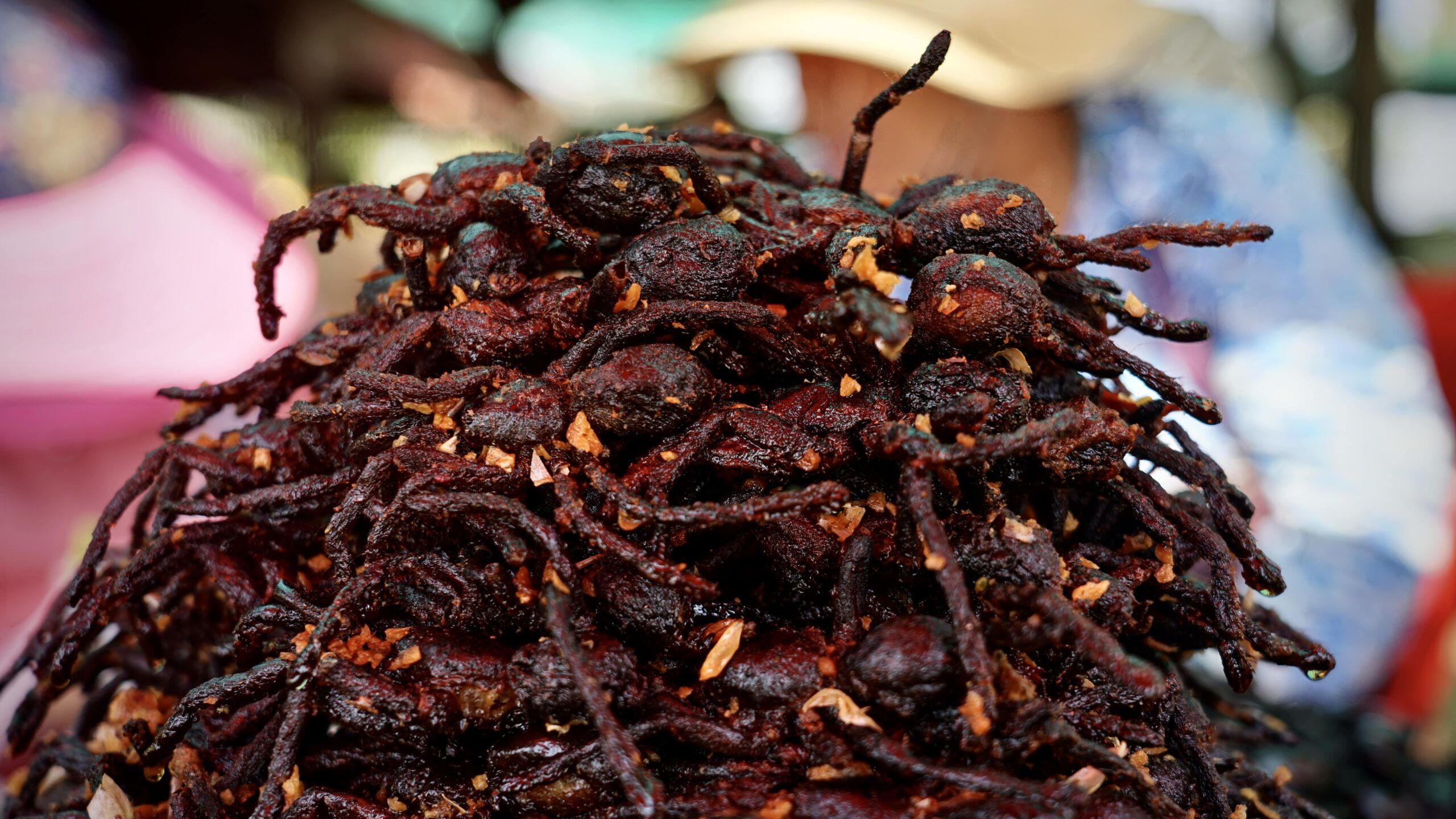 Würzig-rot frittierte Taranteln (Vogelspinnen) gelten als Delikatesse in Kambodscha.